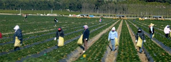 muncitori-pamant-spania