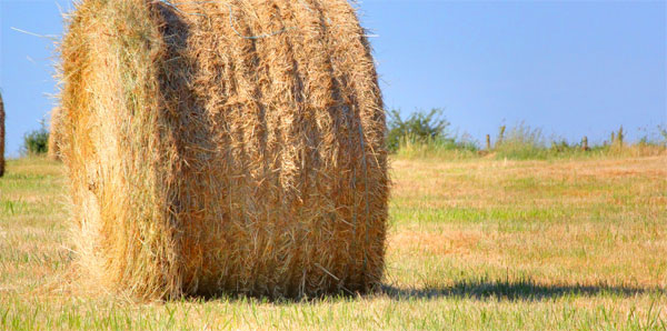 teren-arabil-agricultura