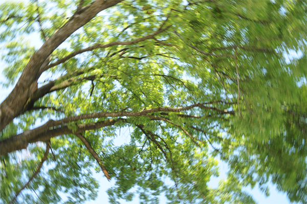 vertij-padure-verdeata-ARHIVAFOTO