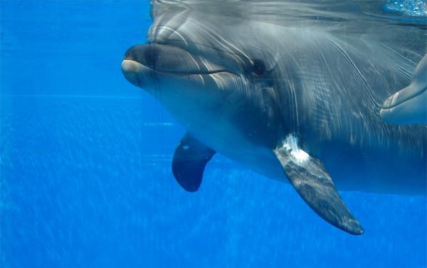 delfini-mamnifere-maritime