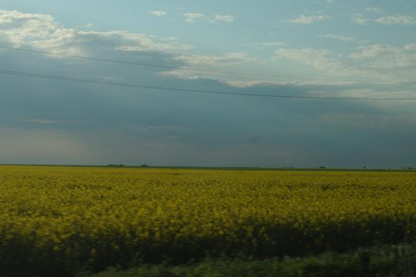 mediu-natura-ecologie