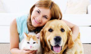 Diversitate produse pet shop pentru caini si pisici