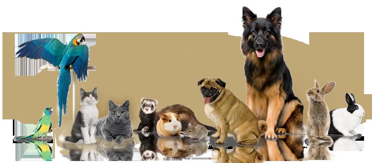 pet shop online pentru caini, pisici, pesti, pasari si animale de ferma