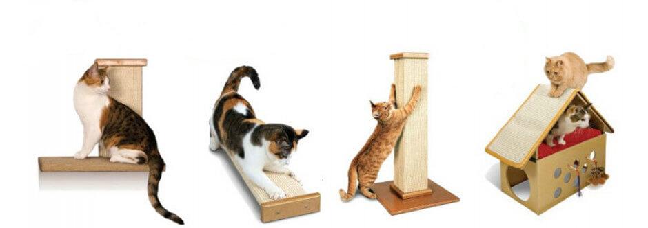 Accesorii pentru pisici din oferta site-ului PetsMania