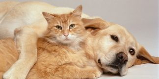 Magazine online cu mancare, accesorii si farmacii veterinare pentru caini si pisici pe PetsMania